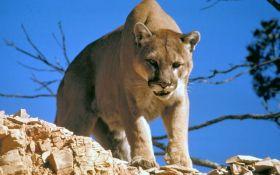 Еще одно животное из Красной Книги официально признано вымершим
