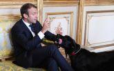 Собака президента Франции сорвала важную встречу: опубликовано курьезное видео