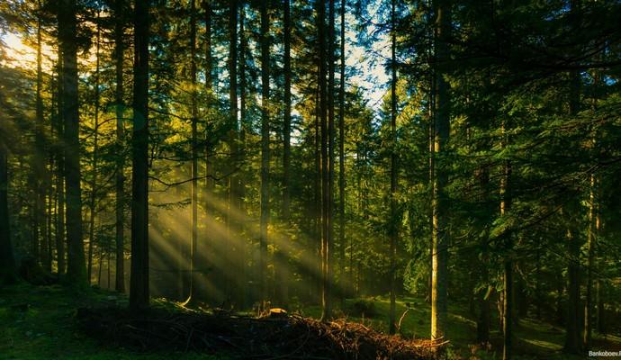 Посадка деревьев вредит природе - ученые