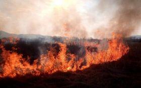 Почему не могут потушить пожар на Житомирщине - уже названа причина