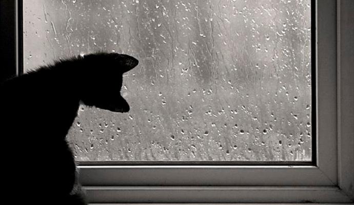 Погода в Украине на сегодня: на западе дожди, температура днем от +1 до +13