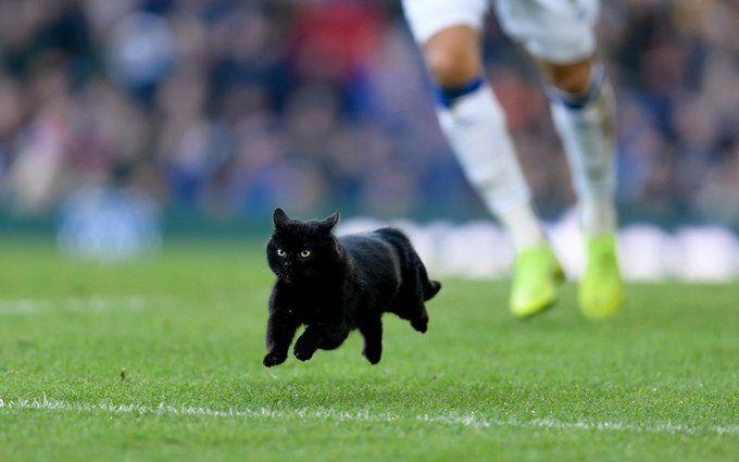 Чорний кіт перервав матч англійської Прем'єр-ліги і став зіркою мережі: відео курйозу