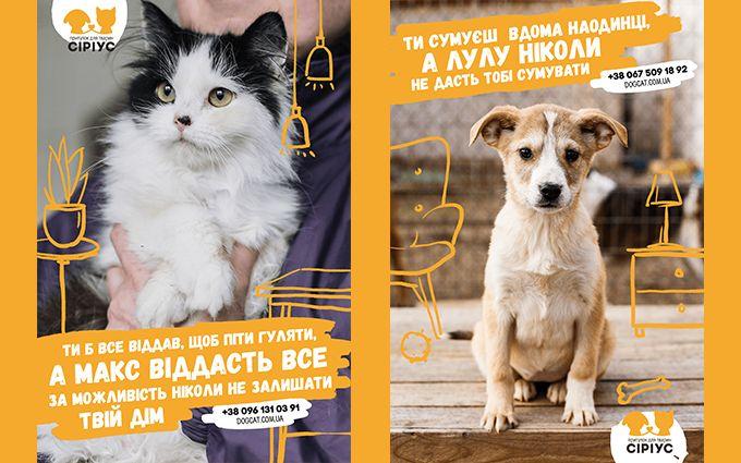 """Не грусти в одиночку: приют для животных """"Сириус"""" и TABASCO призывают найти новый дом для четвероногих друзей"""