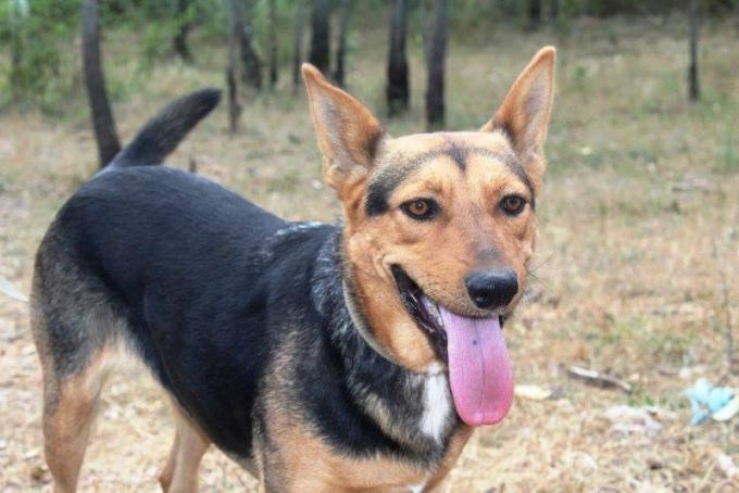 Найди друга: необыкновенные собаки ждут любящих хозяев (2)