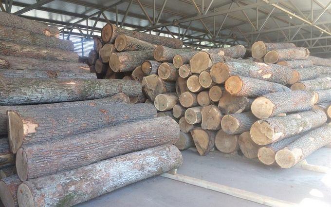 Луценко показав боротьбу з вирубкою лісу: опубліковані фото