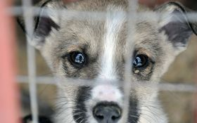 Прихисти: 5 притулків, де можна взяти тваринку додому
