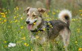 Найди друга: очаровательные собачки мечтают про уютный дом