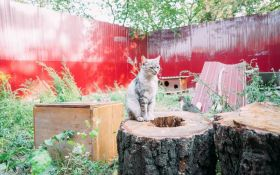 Киевский зоопарк ищет волонтеров, которые будут гладить котов