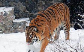 У Київський зоопарк прийшла справжня зима: опубліковані цікаві фото тварин