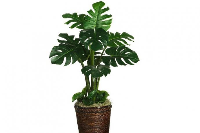 Комнатные растения, которые могут навредить ребенку (6)