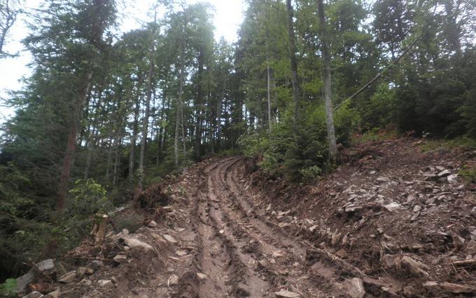 В Карпатах масштабная экологическая катастрофа: опубликованы фото