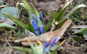 В Украине увидели первые признаки приближения весны: опубликованы фото