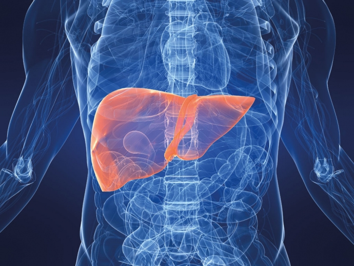 Печінка відновлюється швидше при дієті зі зниженим вмістом цукру