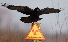 Ученые из Украины и Японии договорились совместно исследовать зону ЧАЭС