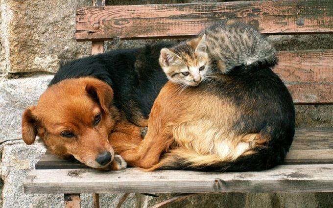 Заиздевательства над животными можно получить до8 лет