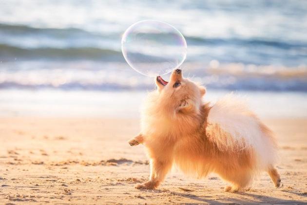 На престижному конкурсі обрали найкращі фото собак 2018 року: зворушливі кадри (4)