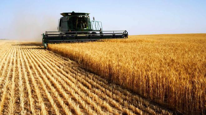Розвиток українського агроринку після прийняття закону про вільний обіг земель. Які перспективи?