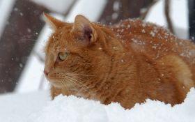 Коли в Києві випаде перший сніг: синоптики назвали дату