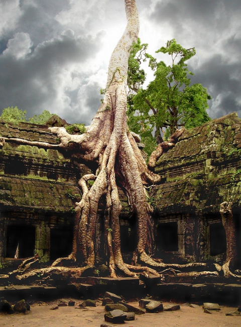 Удивительные деревья нашей планеты (18 фото) (8)