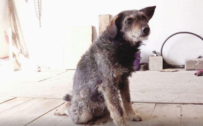Врятуймо разом ще одне життя: потрібна допомога безпритульній собаці, яку намагалися спалити заживо