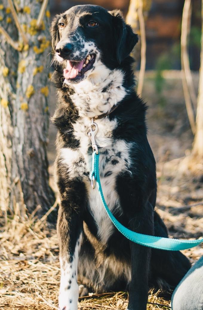 Найди друга: 8 замечательных собачек мечтают найти дом (6)