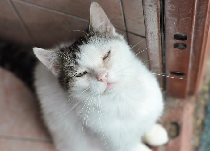 Найди друга: пушистые котики ждут любящих хозяев (4)