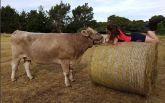 Дівчина з Нової Зеландії, яка їздить верхи на корові, підкорює соцмережі: з'явилися фото та відео