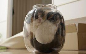 Учений отримав Шнобелівську премію за доведення теорії, що коти - рідина