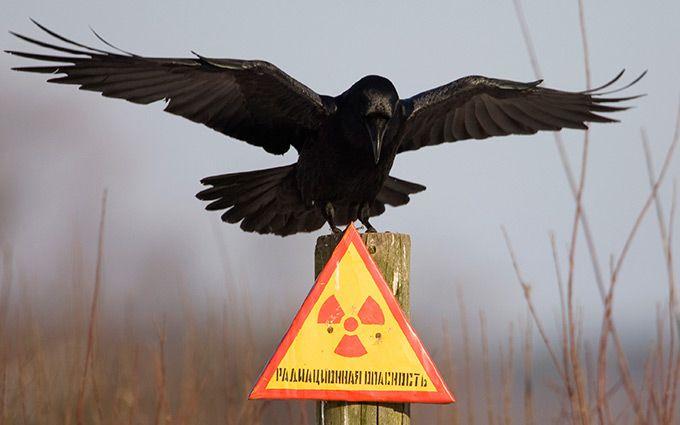 """У Чорнобилі впіймали цілих два загони """"сталкерів"""": з'явилися фото"""