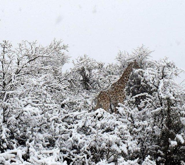 В Африке выпал снег - впечатляющие фото и видео (1)