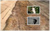 Через екологічну катастрофу в Криму почали гинути тварини і вимирати рослини: з'явилися жахливі фото