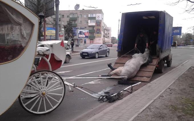 В Мариуполе лошадь везла карету с молодоженами и умерла: опубликованы фото (1)