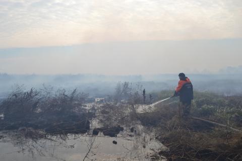 У Київській області горить 15 га торфовищ (6 фото) (5)