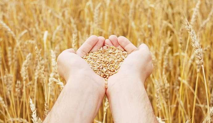 Китайская компания выплатит Украине $7 млн за поставленное зерно - суд