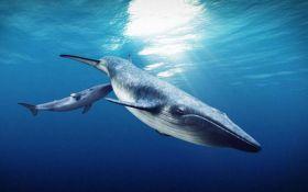 Ученые США рассказали о причинах возникновения гигантских морских животных