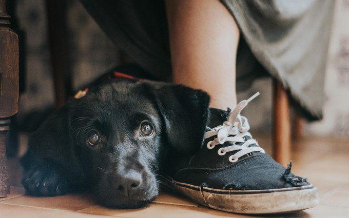 На престижному конкурсі обрали найкращі фото собак 2018 року: зворушливі кадри