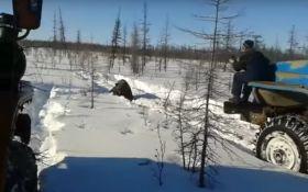Жуткий ролик с россиянами, давящими медведя, возмутил соцсети