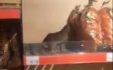 Появилось видео с крысой на полке киевского супермаркета