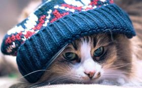 Заморозки возвращаются: в Украине резко ухудшится погода