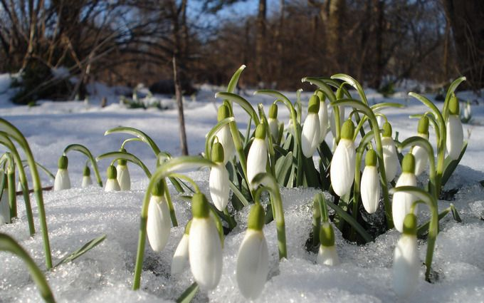 Весенние морозы: синоптики предупредили о возвращении зимы