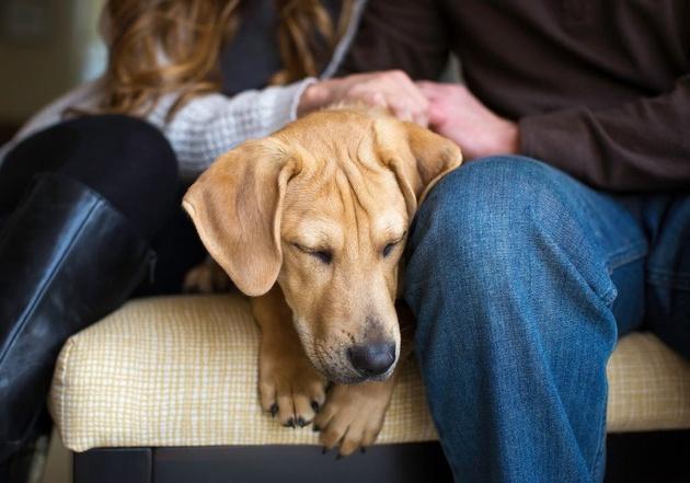 На престижному конкурсі обрали найкращі фото собак 2018 року: зворушливі кадри (8)