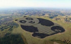 В Китае появится самая милая электростанция: опубликовано видео