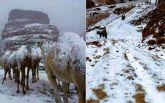 Спекотну Саудівську Аравію засипало снігом: опубліковані видовищні фото і відео
