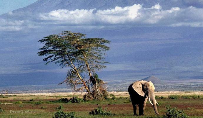 Скасовано дитячі візи у Кенію