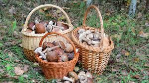 Жителям окупованого Криму заборонять збирати більше 5 кг грибів і ягід