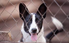 Почему не стоит бояться взять собаку из приюта