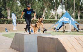 Четырехлапые офицеры: служебные собаки со всей Украины съехались в Днепр