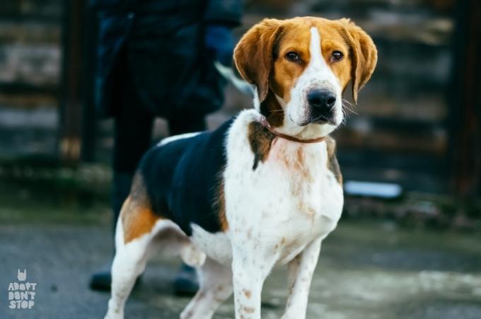 Найди друга: необыкновенные собаки ждут любящих хозяев (11)