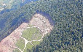 Украинцам ярко объяснили, почему леса в Карпатах не спасти: опубликованы фото