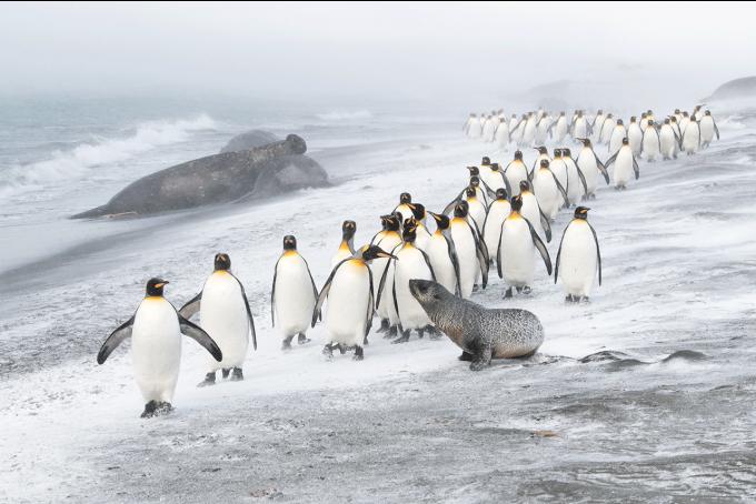 Эти снимки захватывают дух - на престижном конкурсе выбрали лучшие фото дикой природы 2020 года (11)